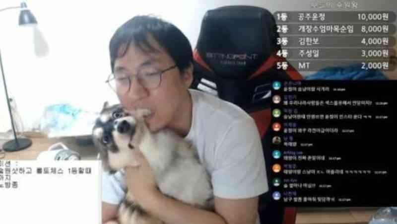 Youtuber agride o cachorro em transmissão ao vivo e internet se revolta