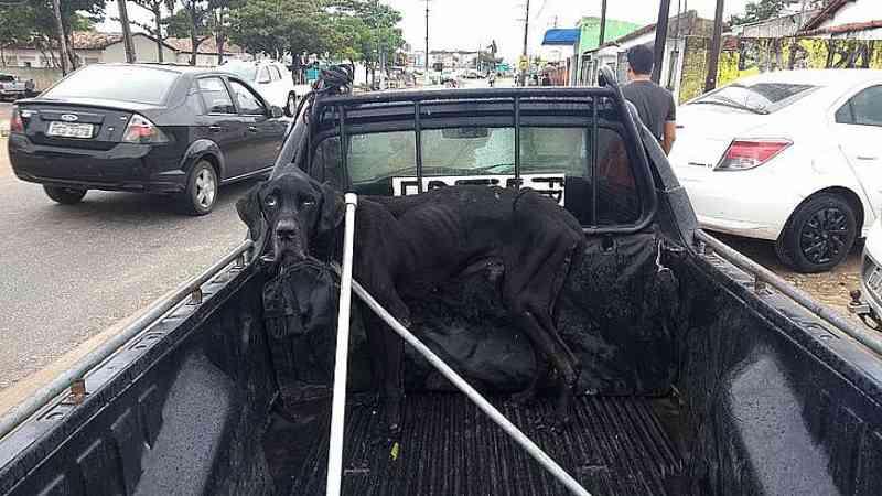 'Cão Guerreiro': denunciado por maus-tratos e abandono, criador recebe punição