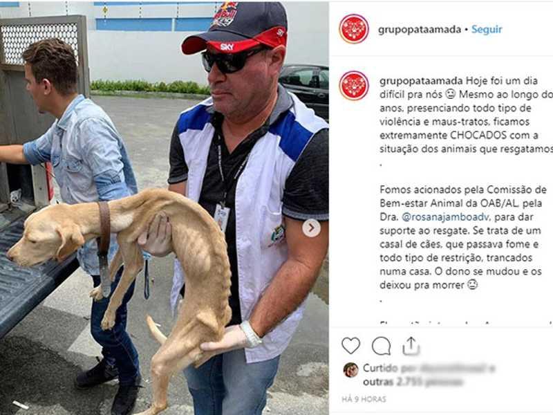 Cães com sinais de maus-tratos são resgatados por ONG no Salvador Lyra. FOTO: REPRODUÇÃO/INSTAGRAM