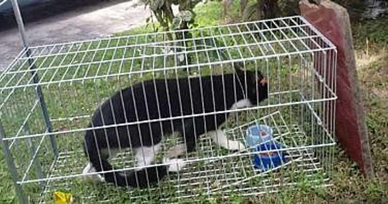 OAB vai investigar captura de animais domésticos em condomínio de Rio Largo, AL