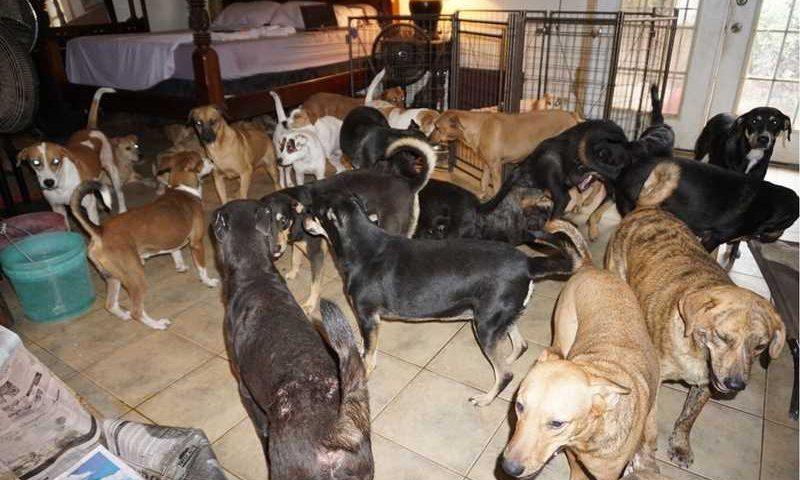 Imagem publicada em uma rede social mostra cachorros resgatados em Nassau em setembro de 2019 — Foto: Reprodução/Chella Phillips