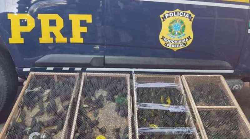 Polícia resgata 400 pássaros transportados irregularmente em bagageiro de ônibus na Bahia