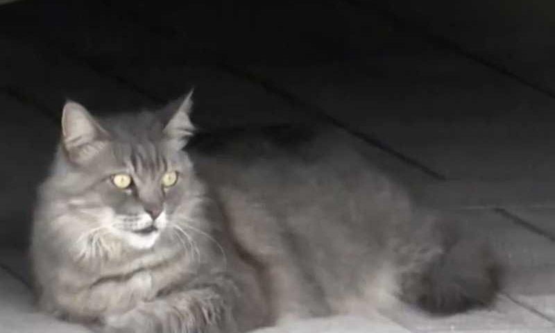 Gatos sem dono em condomínio são protegidos pela Justiça — Foto: Reprodução/TV Subaé