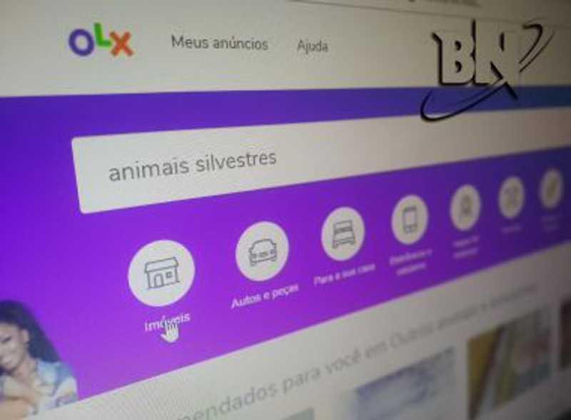 Foto: Bahia Notícias