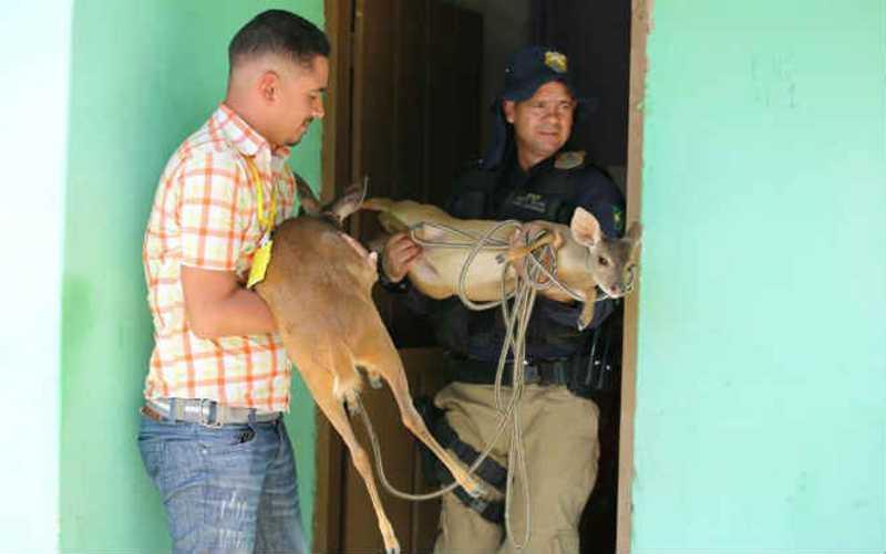 Ações como a Fiscalização Preventiva Integrada (FPI) já resgataram mais de 900 animais, entre eles dois veados | Foto: Divulgação