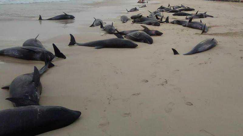 Centenas de golfinhos morrem encalhados em praia de Cabo Verde. Boa Vista no Ar/Facebook