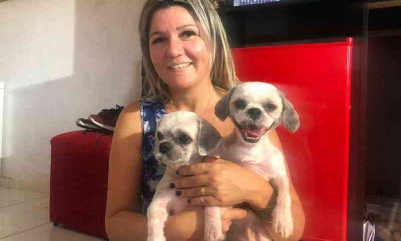 Cachorros da raça Shit-zu, rebatizados de Maggie e Spock. — Foto: Marina Alves/SVM