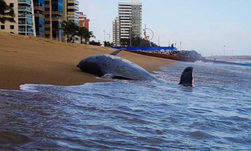 Corpo do animal, porém, teria sido removido pela própria maré ou por uma terceira pessoa, de acordo com ONGs (Foto: Reprodução / Instagram )