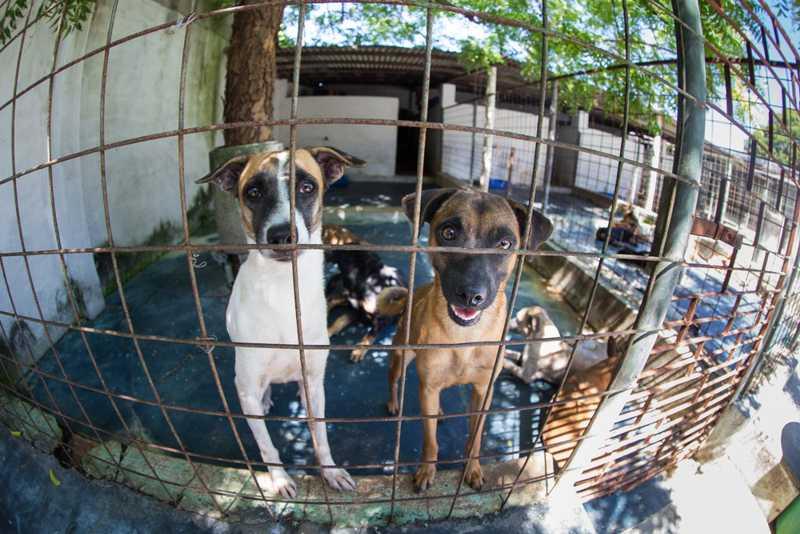 Entidade cuida de aproximadamente 1000 animais, entre cães e gatos — Foto: Fabiane de Paula/Agência Diário