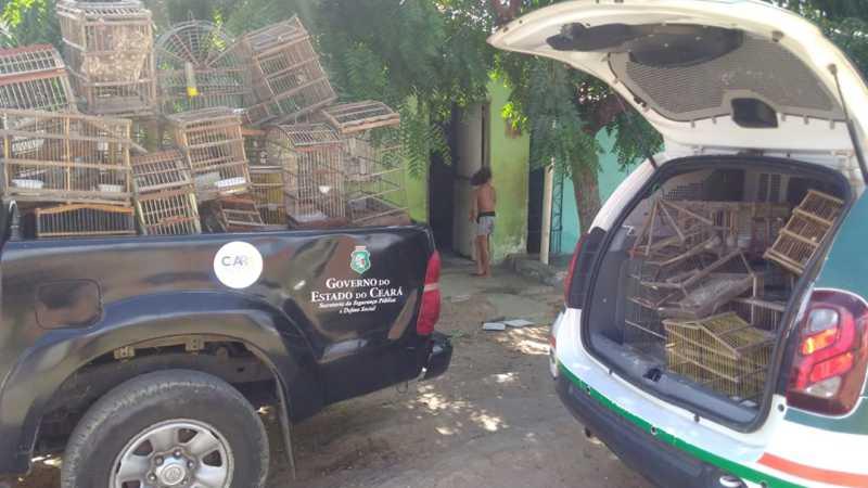 O infrator do crime ambiental em Sobral foi conduzido à Delegacia Regional de Sobral Foto: Reprodução/BPMA