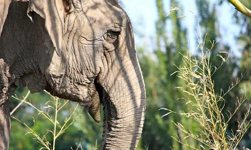 Ramba deve chegar em Mato Grosso em outubro — Foto: Santuário dos Elefantes/ Divulgação