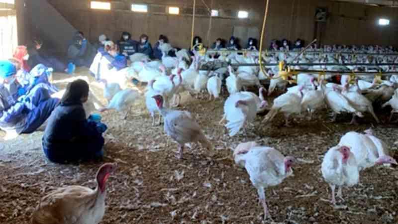 Ativistas ocupam granja de perus para protestar contra o tratamento