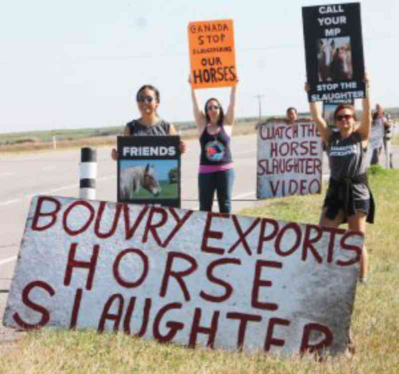 Ativistas organizam eventos para protestar contra o uso de animais como alimento