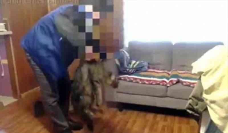 Reportados novos casos de maus-tratos realizados por jovem que agrediu gatos