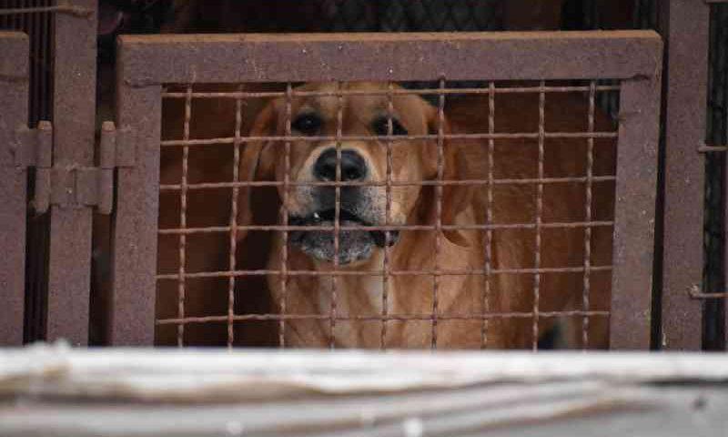 Investigação: Por dentro de uma fazenda horrível de carne de cachorro administrada pela Associação de Criadores de Cães da Coréia