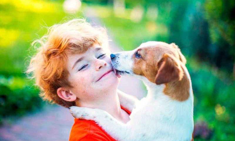 Escola espanhola inclui proteção animal como disciplina no currículo escolar