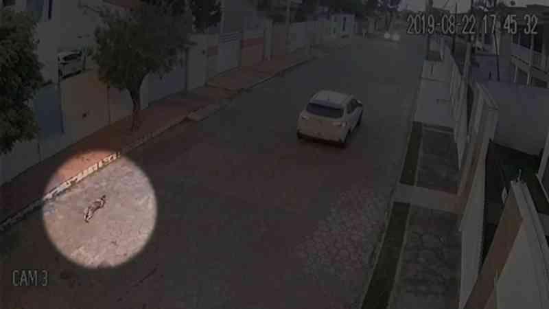 Professor universitário é indiciado por atirar e matar cachorro em São Mateus, ES
