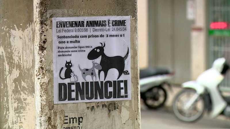Ong alerta para que moradores denunciem casos de maus-tratos na cidade — Foto: Reprodução/ TV Gazeta