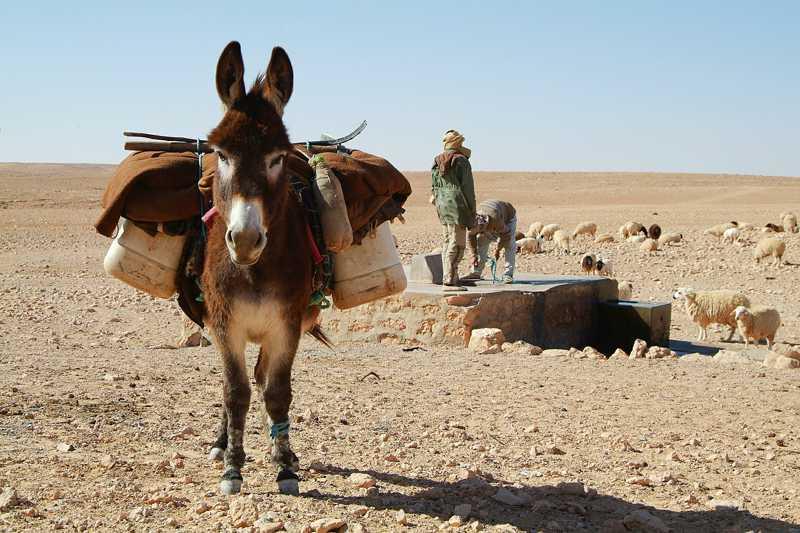 Dezenas de burros estão a ser mortos no deserto de Mojave. E há um prémio para quem souber porquê