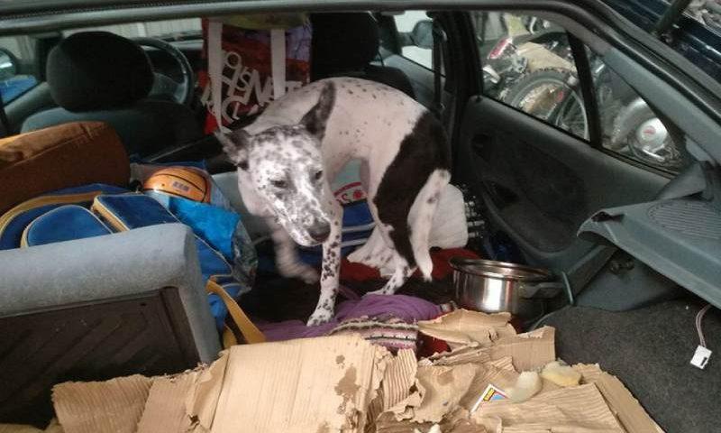Espanha: Denunciado um homem por abandonar seu cão em veículo sob sol de 30 graus