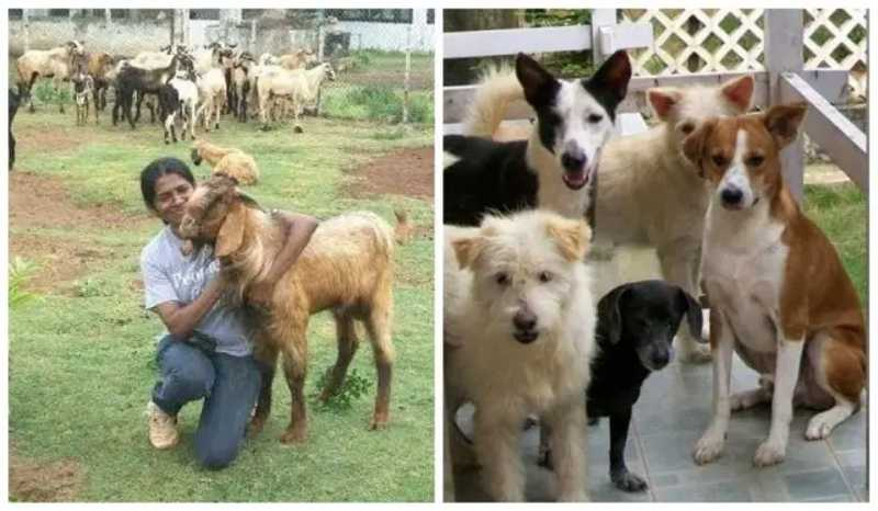 Shiranee Pereira, a indiana que já salvou oitocentos animais da eletrocução em Chennai. Foto: Facebook/shiranee.pereira