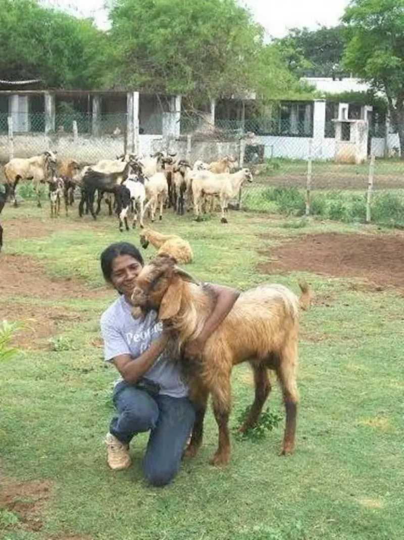 Shiranee tem uma fazenda de 38 mil metros quadrados em que abriga todos os animais que resgata. Foto: Facebook/shiranee.pereira