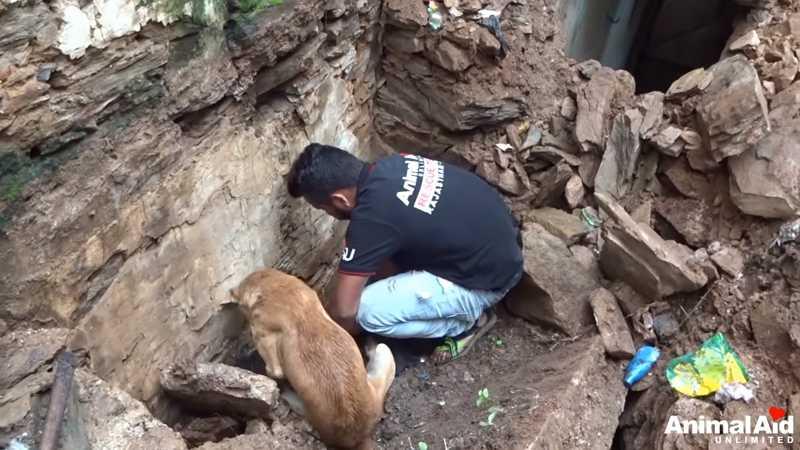 Os esforços de uma cadela para salvar as suas crias; vídeo