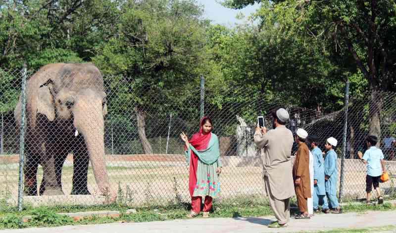 Corte adia o veredito no caso de negligência do Zoológico em Islamabade, no Paquistão