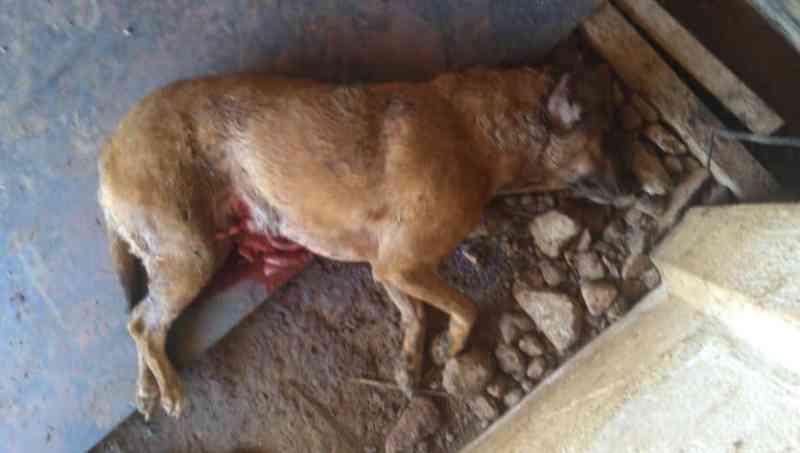 Vereadora de Araxá (MG) é acusada de maus-tratos aos animais