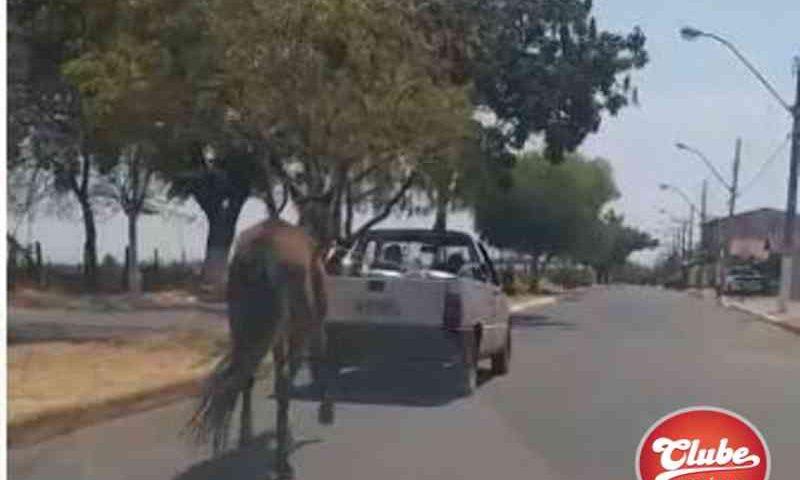Covardia: internauta flagra animal sendo puxado amarrado em carroceria de automóvel; vídeo