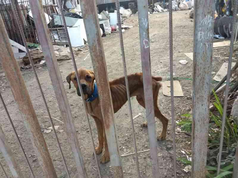 Internautas denunciam maus-tratos sofridos por cachorro em 'ferro velho' de Sete Lagoas, MG