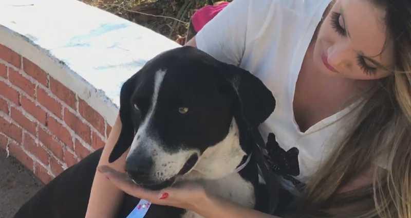 Negão foi atacado por um pitbull na última semana. Após denunciar o caso, protetora está sofrendo ameaças de morte. — Foto: Reprodução/TV Globo