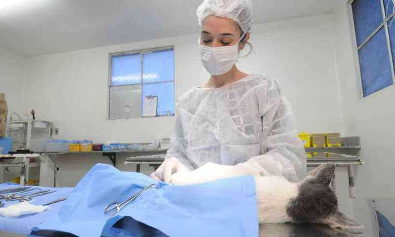 Castração de gatos pela PBH no Bairro Caicara (foto: Leandro Couri/EM/D.A Press)