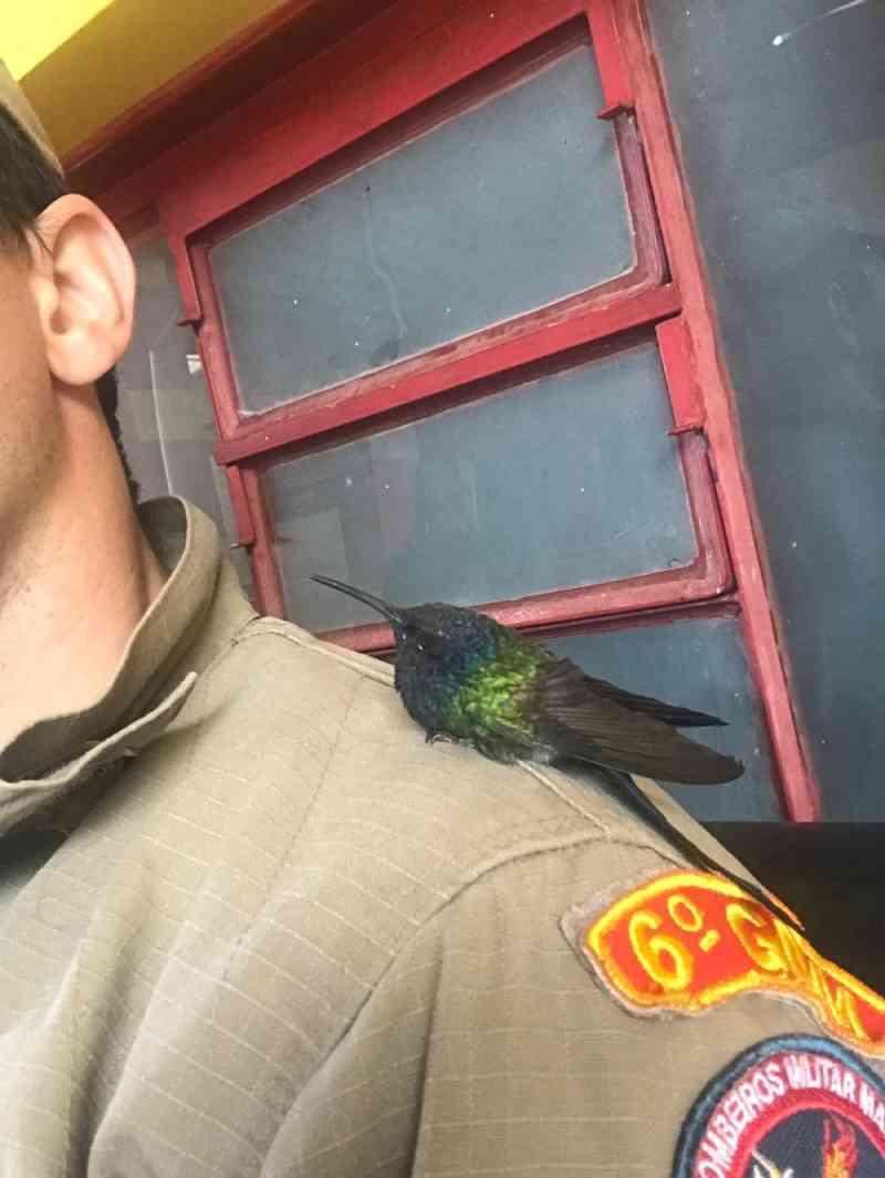 Bombeiro encontra beija-flor ferido na calçada, cuida dele por 15 dias e o devolve para o Cras: 'Voa cara, voa'