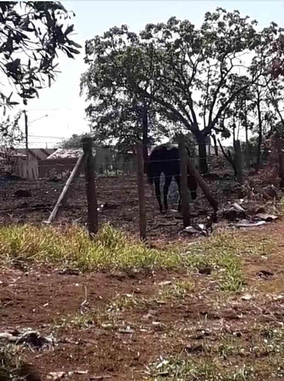 Cavalo é deixado no sol quente, sem água e sem comida em Campo Grande, MS; vídeo