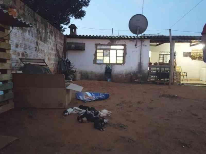Expostos a calor de 43 graus, 8 filhotes de cão são achados mortos em Campo Grande, MS