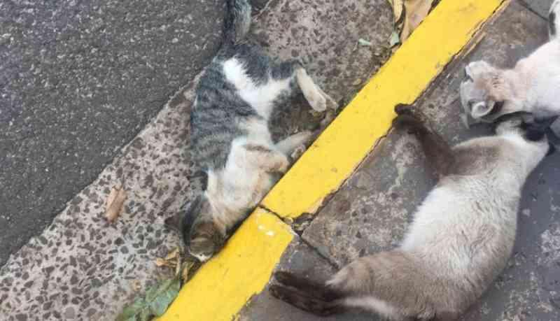 Moradores denunciam 'serial killer' de gatos em condomínio no Santa Luzia, em Campo Grande, MS