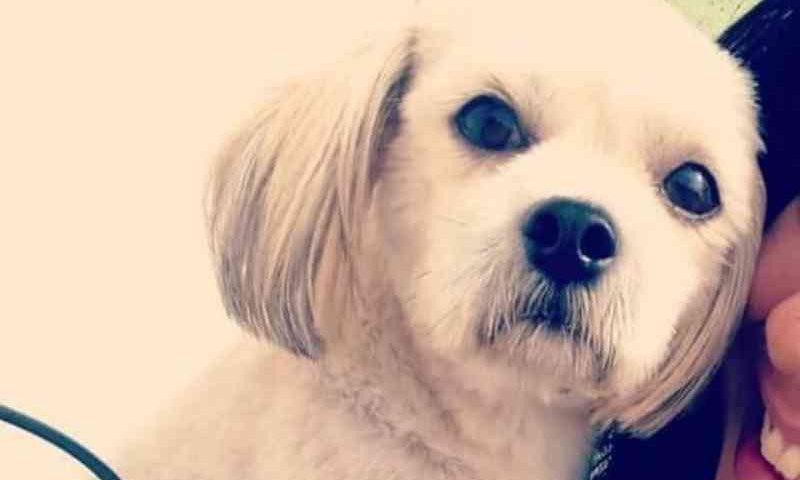 Família busca ajuda para recuperação do Toby; cão teve a orelha mutilada e a pele do pescoço arrancada