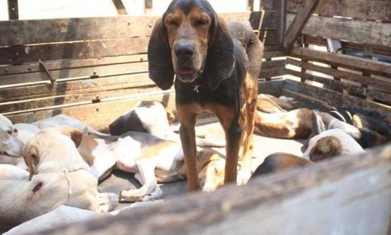 Muitos cachorros foram encontrados sem água ou alimentação adequada. Além disso, alguns deles estavam num cubículo repleto de fezes (Foto: Marina Pacheco)