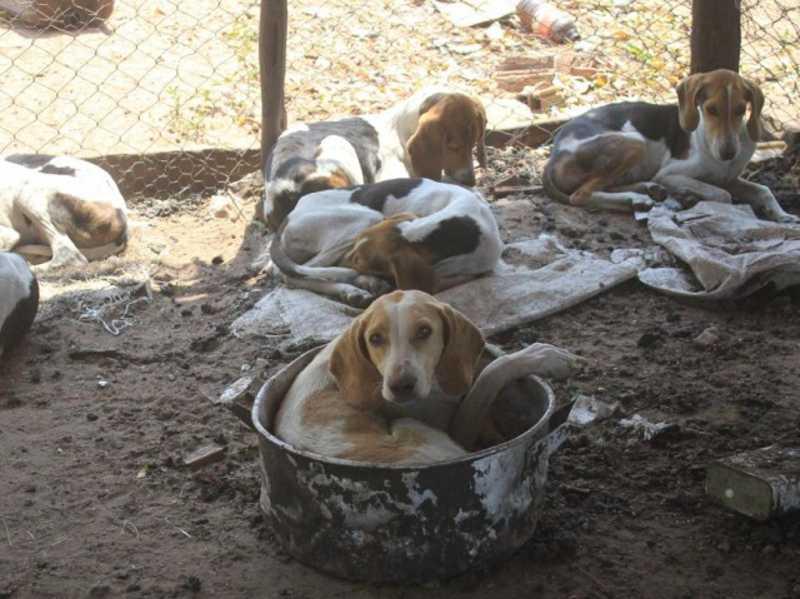 Animais foram recolhidos pelo CCZ após constatação de maus tratos (Foto: Marina Pacheco)