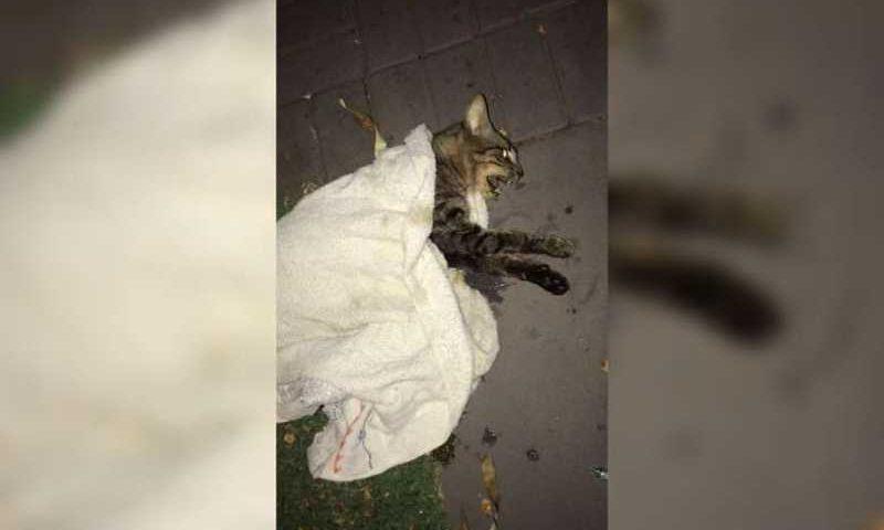O gato foi encontrado pelos condôminos já no início da noite do último domingo, alguns tentaram ajudar o animal, mas ele não resistiu e morreu (Reprodução/Vídeo)