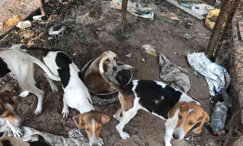 Capataz que mantinha 40 cães em meio a fezes e em canil clandestino diz que tinha 'prazer em criar animais'