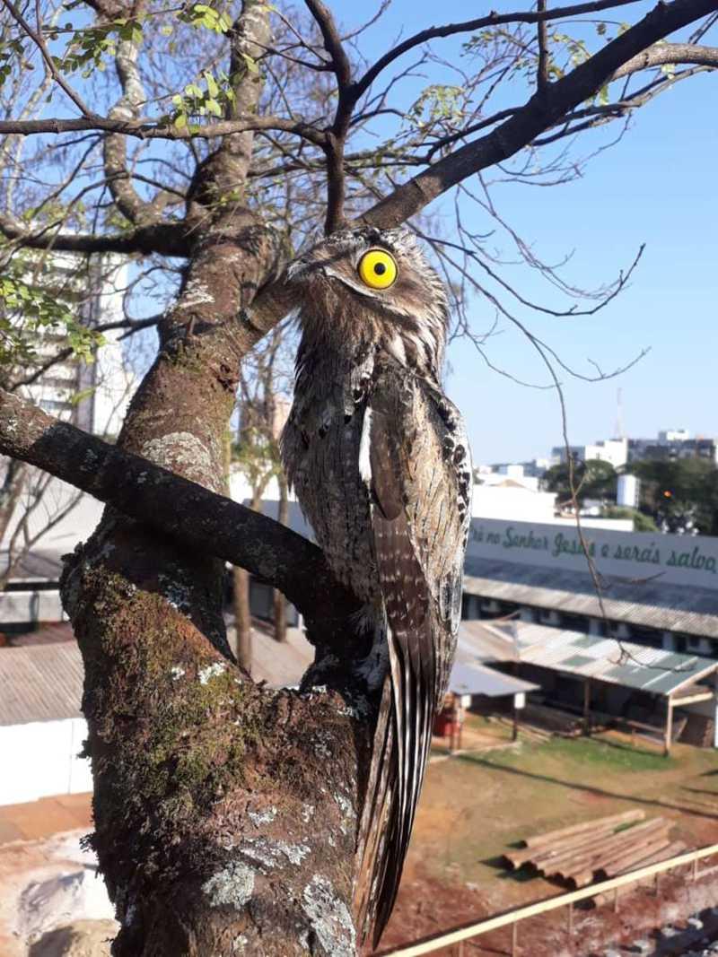Biólogos alertam que Dourados (MS) vive urbanização de animais silvestres