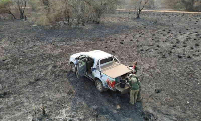 Incêndios terão efeito catastrófico para animais no Pantanal, prevê Instituto