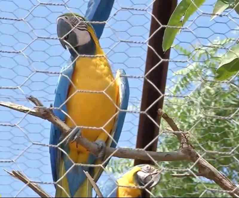 Animais resgatados vão passar por reabilitação e avaliação para definir se podem voltar à natureza em MT
