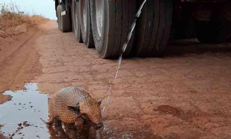 Animal tomou banho em água que caía de caminhão. — Foto: Caio Giovani Zolinger Borges/Arquivo pessoal