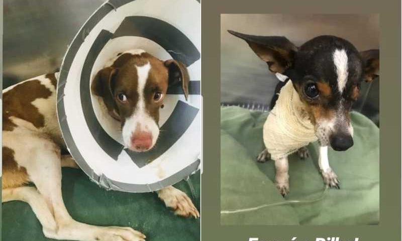 Dono tentou matar 2 cães com carrapaticida e foi detido em hospital veterinário em Cuiabá — Foto: Divulgação