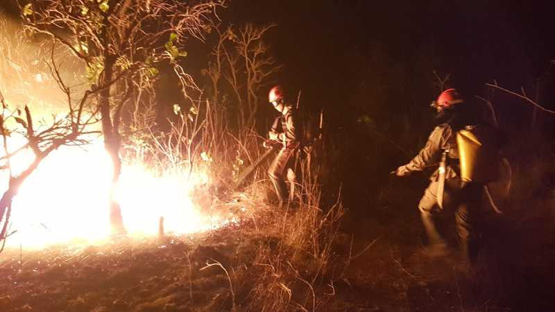 Fogo nas florestas prejudica a vida silvestre — Foto: Corpo de Bombeiros-MT/ Divulgação