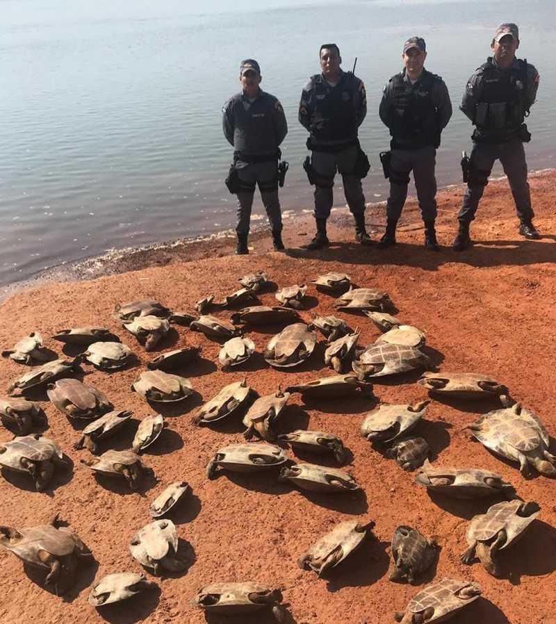 Tartarugas são salvas por policiais militares de MT. — Foto: PM-MT