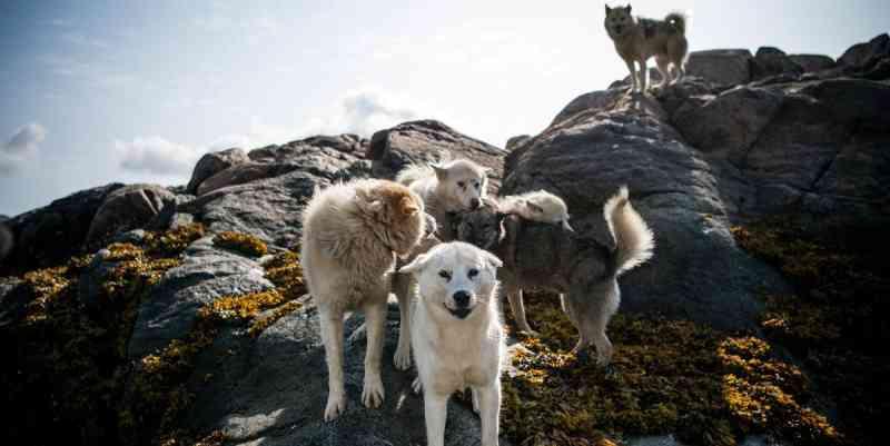 Dezenas de cães afetados por estranha doença na Noruega